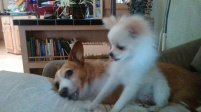 Lulu teasing Nola for the bone
