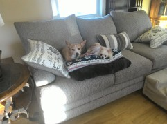 The girls relaxing on their new couch